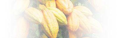 Société de Développement du Cacao