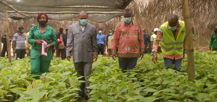 Le DG, le DGA et le Préfet de la vallée du Ntem, visitent la pépinière du Centre SODECAO d'Ebolowa en présence du Chef de Centre.